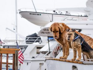 ¿Qué navieras permiten viajar con perro en crucero?