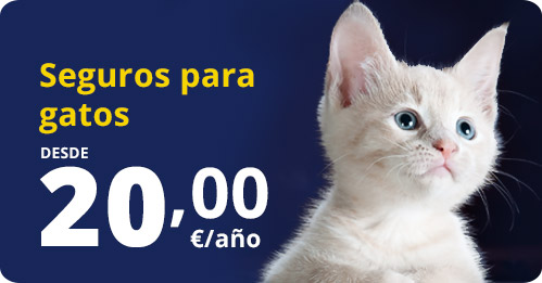 contrata seguro gatos