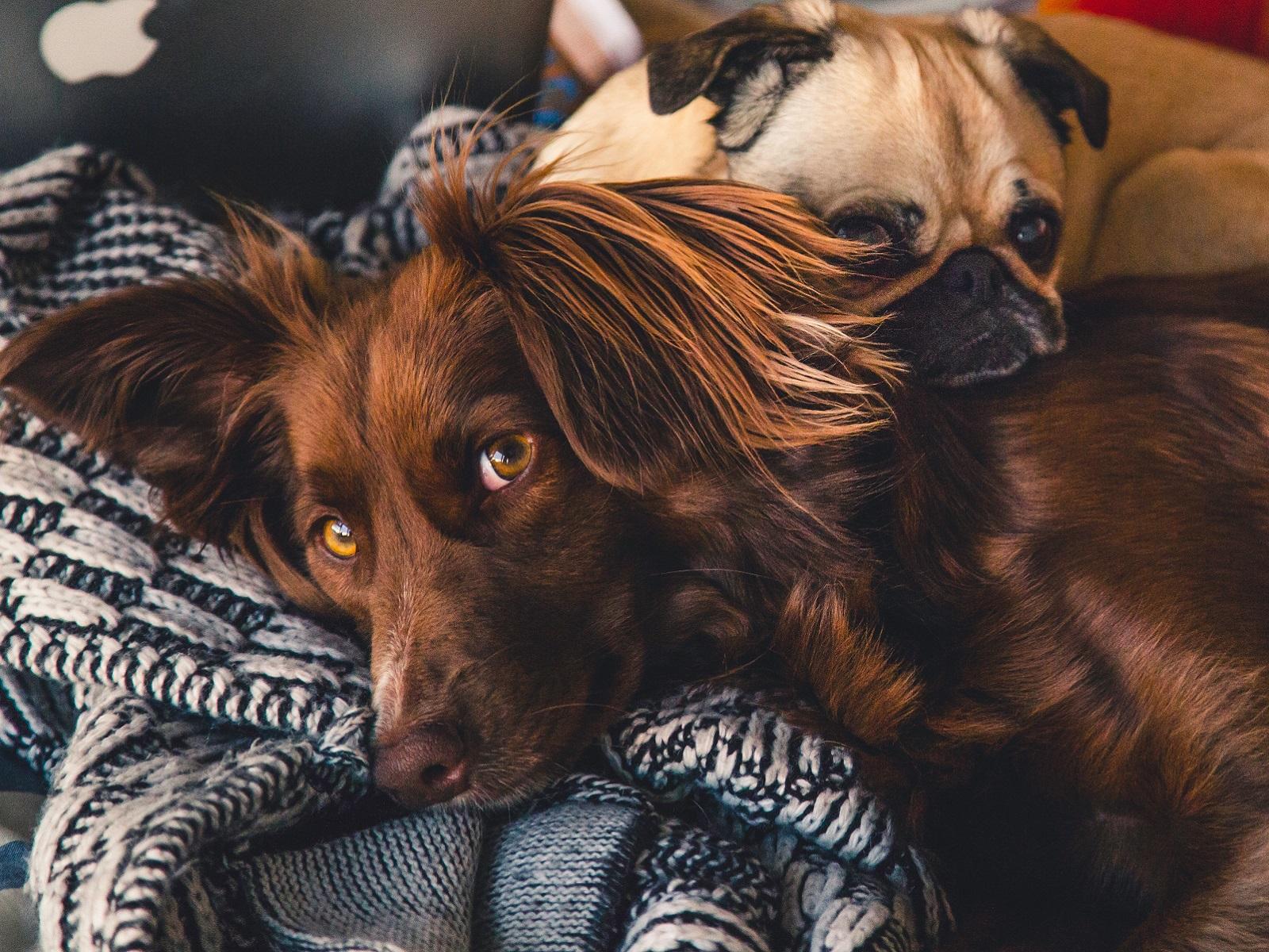 Qué cubre el seguro veterinario para mascotas